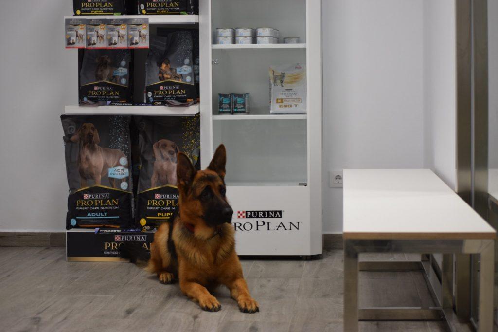 veterinaria_guvet_santa_comba_instalaciones (10)