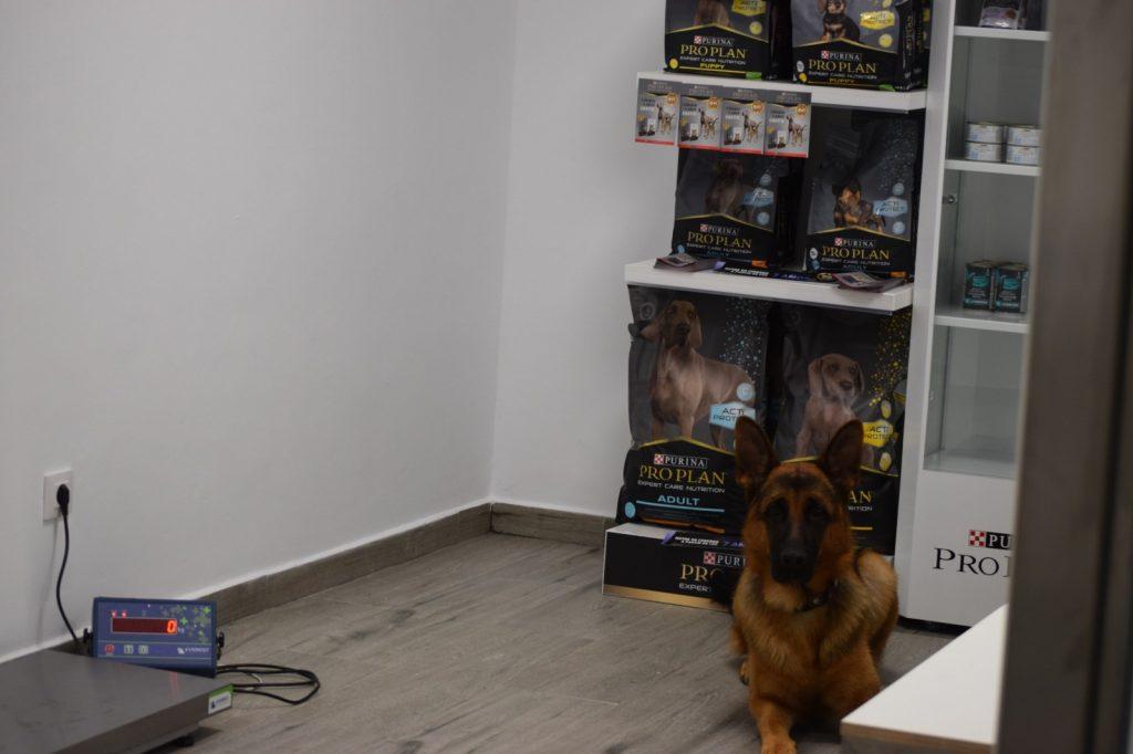 veterinaria_guvet_santa_comba_instalaciones (11)