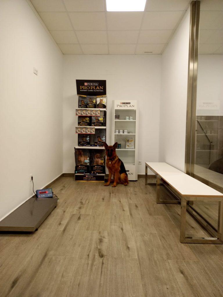 veterinaria_guvet_santa_comba_instalaciones (17)